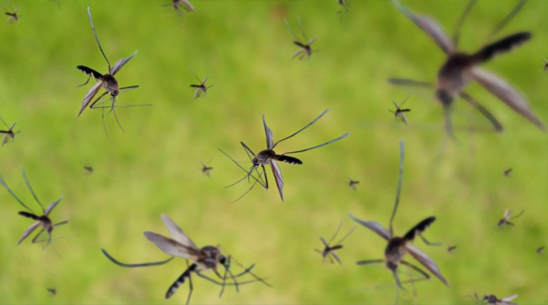 CSIR-NEIST scientists develop mosquito repellant herbal candles