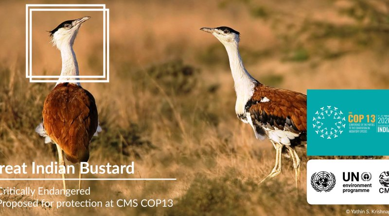 COP13 Great Indian Bustard