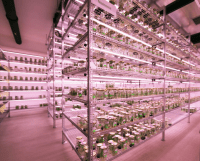 LED Horticultural Lighting Systems