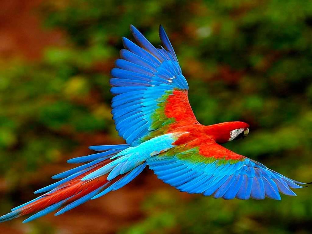 México, entre los países con más especies en peligro crítico de extinción