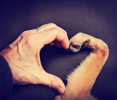 A human hand meets with a dog paw to make the shape of a heart.