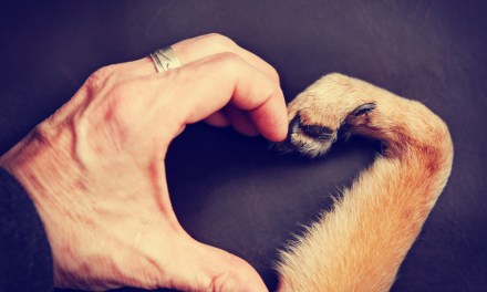 Get Thee to a Woofery! Why Having a Dog is Good for Your Health