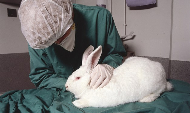 A Case for Animal Testing
