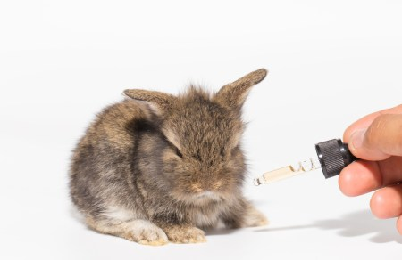 A baby bunny that is getting medicine poured on it.