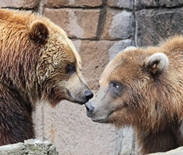 Visit The Indianapolis Zoo During Easter Weekend Tickets Are Valid March St