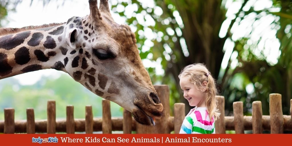 Indy Animal Encounters Where Kids Can See Animals In Indianapolis