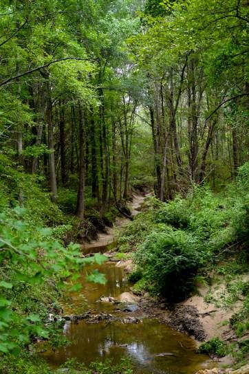 DSHP-IB-6-Crooked Creek