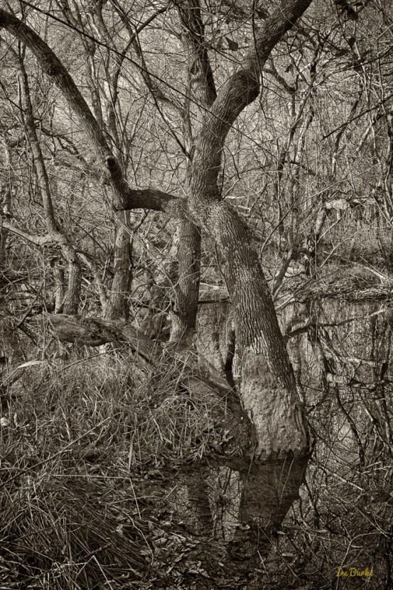 Mill Creek-150106-L1009376_HDR_2-Edit
