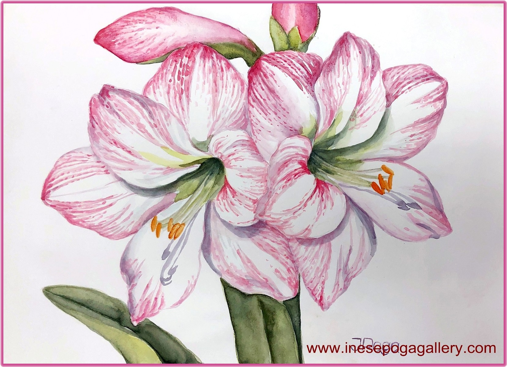 Floral watercolors: the softness that soothes