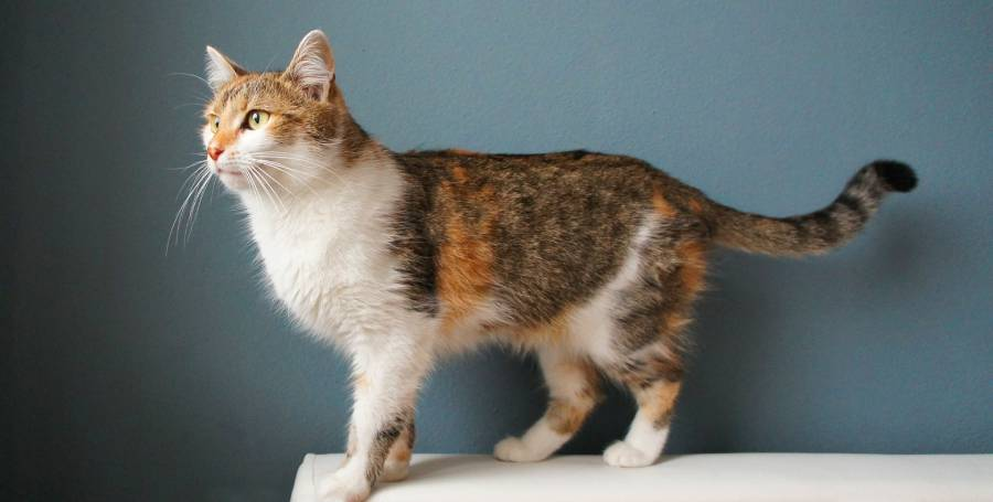 Какво е общото между котките и дълголетието?