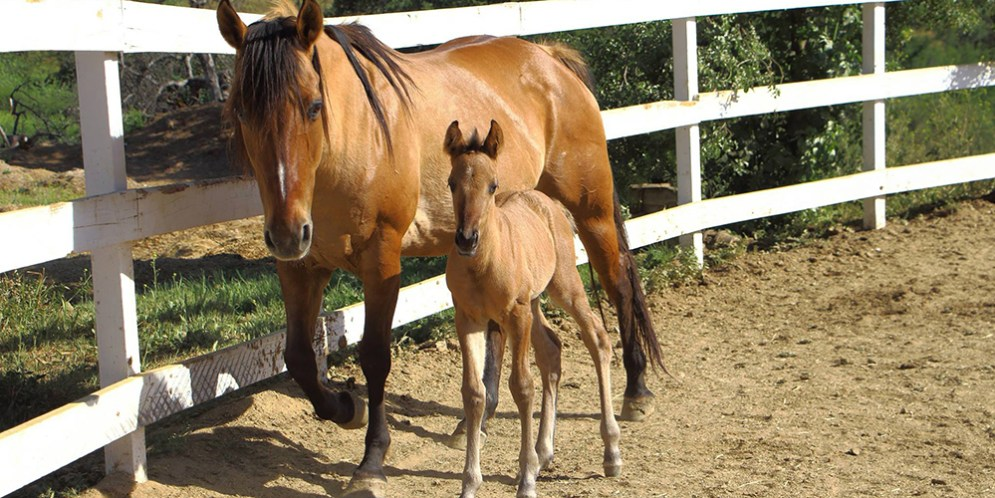 HiCaliber Horse Rescue ensnared in allegations of animal cruelty, fraud