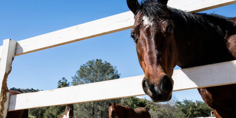 The nitty gritty on horse rescues in San Diego County