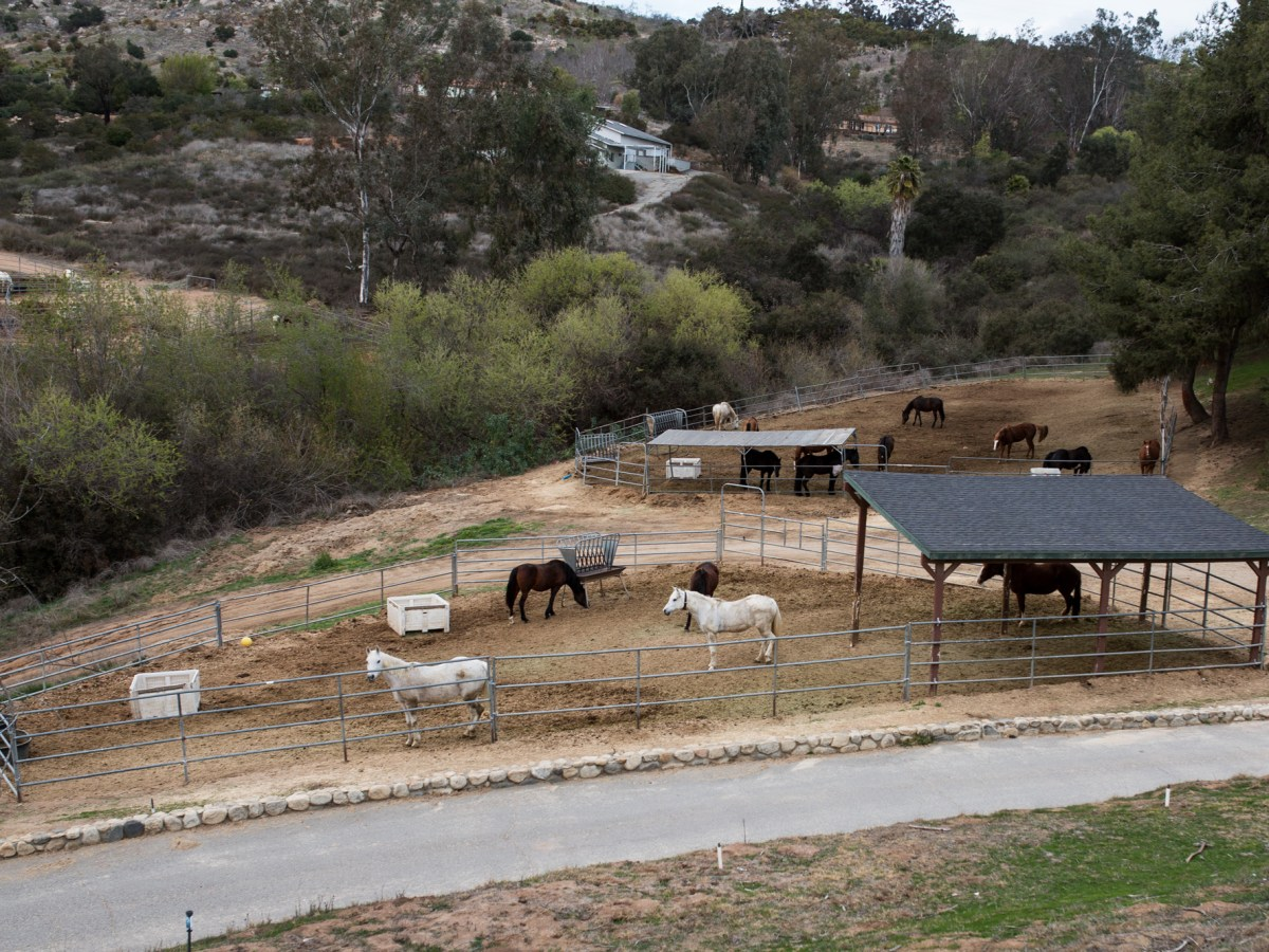 HiCaliber Horse Rescue's Valley Center property shown on March 2, 2018.