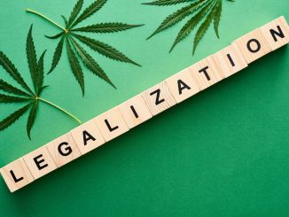 legalizzazione-referendum-cannabis
