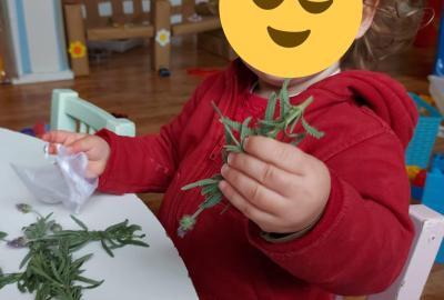 plantes aromatiques llar infants bambi