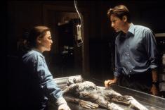 Autopsie am Unbekannten