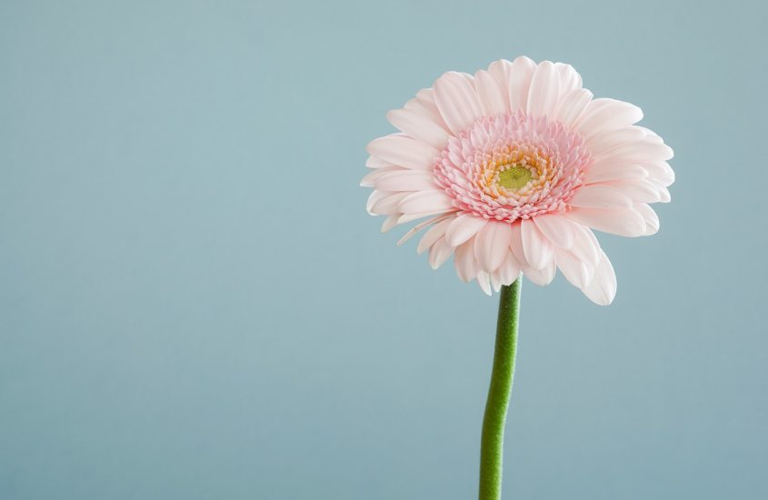 1000 Gedanken und Sorgen im Kopf? Finde mit dieser 5-Sinne-Achtsamkeitsübung deine Mitte