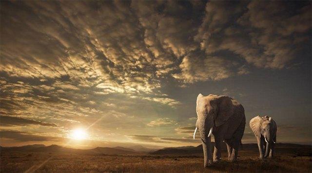 """Walking in Savannah"", Troféu de Prata na categoria Wildlife   Foto: Jackson Carvalho"