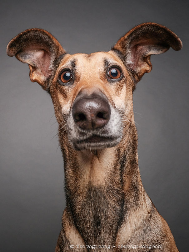 dogs-questioning-the-photographers-sanity-5__605