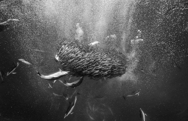 baleias_2