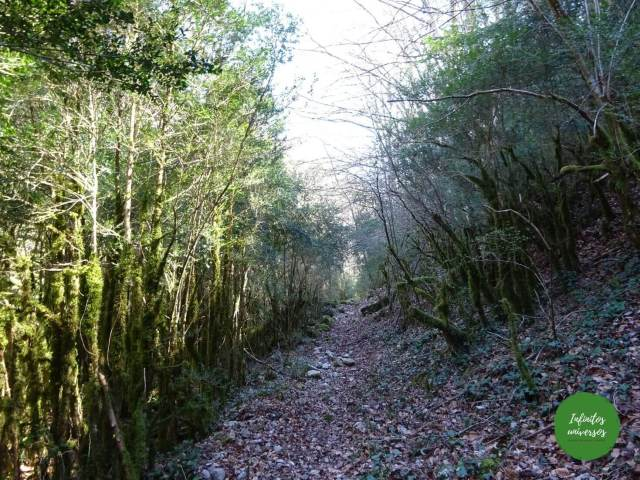 Sendero por el bosque