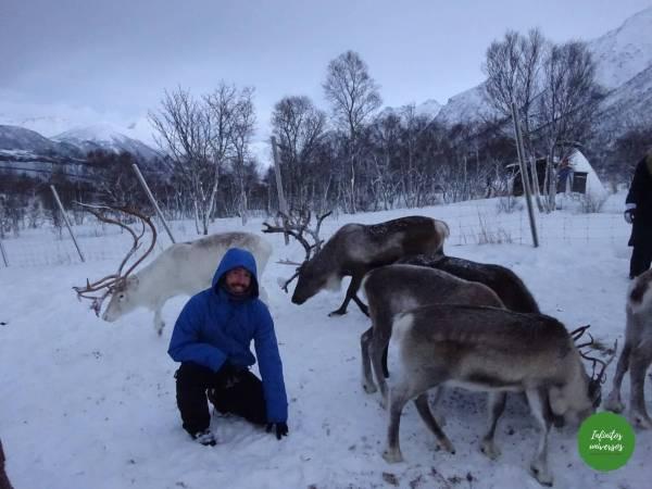 Sami laponia renos - Europa en verano