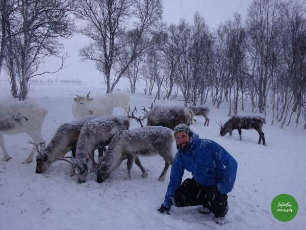 Rodeado de renos Renos sami Laponia noruega