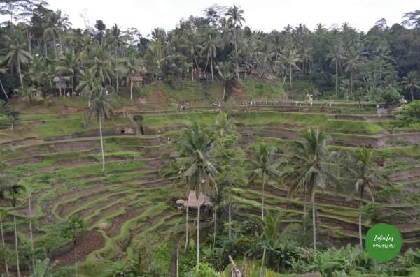 tegallalang  - Viaje a Indonesia en 2 semanas