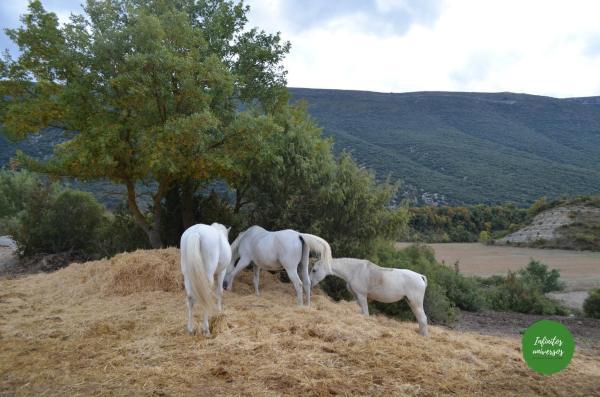 Caballo de camino a la Foz de Arbaiun