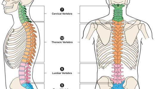 首の役割と首痛の種類・症状とは