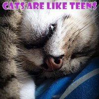 A great simile - Cats are like teens