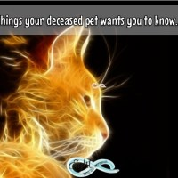Things your deceased pet wants you to know