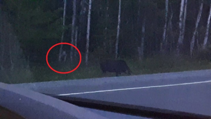 "What is this ""Mysterious creature"" that appears in the Forest? (Video)"