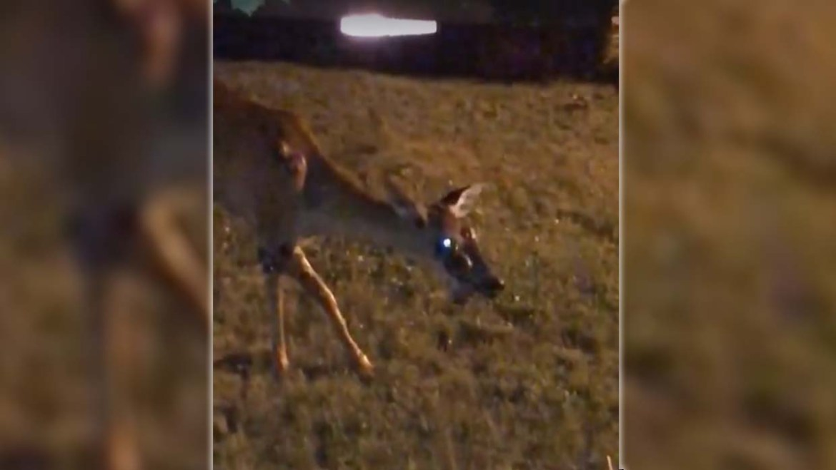 They record a zombie deer in the garden of a house in the United States, will the infection started to humans?