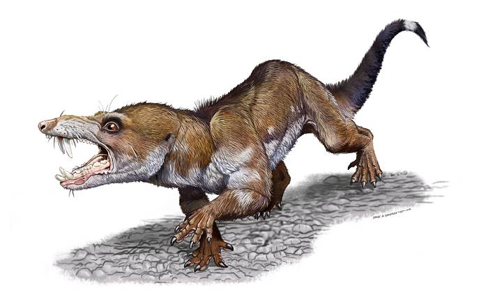 Paleontologists discovered a   new prehistoric species named Pseudotherium argentinus identical to Scrat of 'The Ice Age'