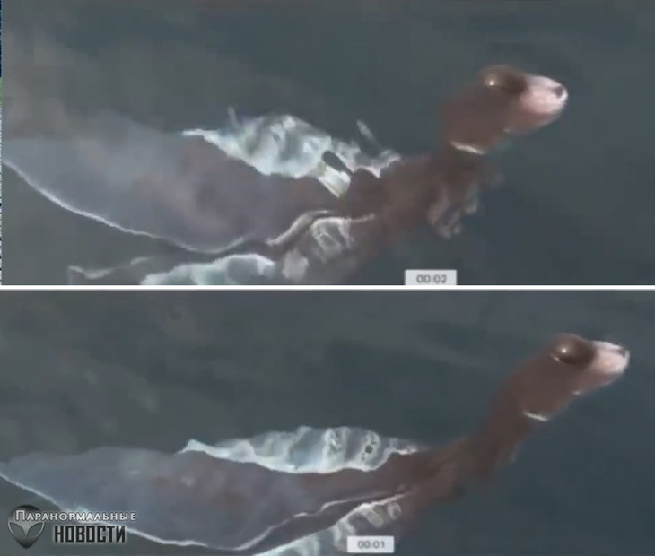 Plesiosaurus Cub? In Thailand, a very strange creature was photographed in water