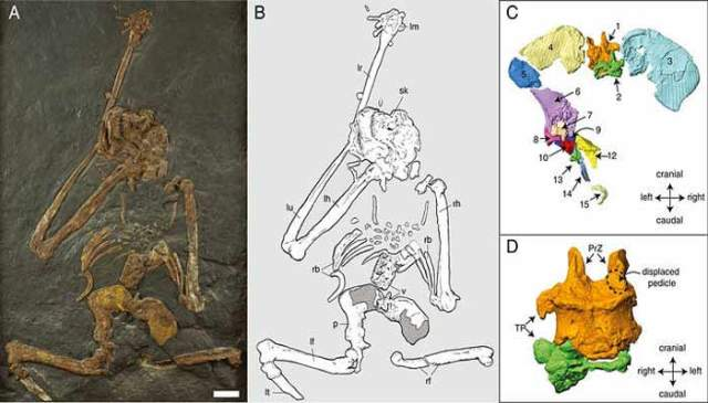 Researchers found 7 million years old primates that walked on their 2 feet