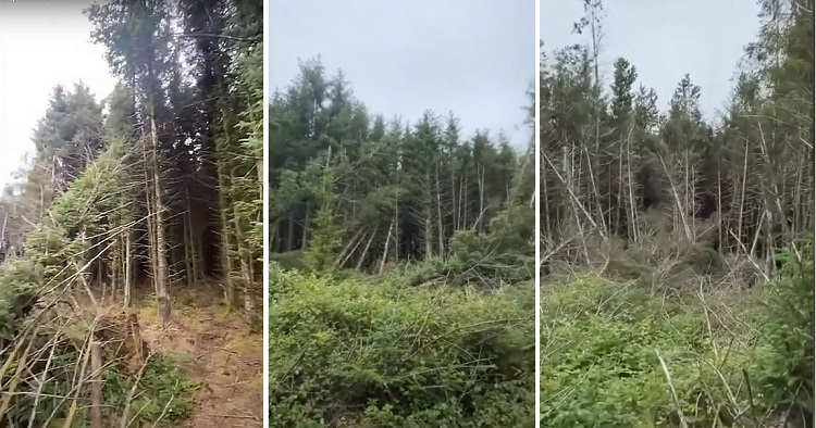 A man discovered a UFO landing site in the forest and heard strange screams