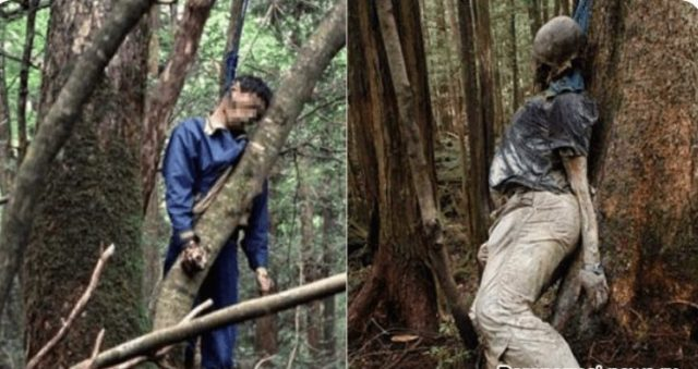 Bodies Found In Japanese Suicide Forest