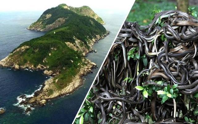 The Snake Island: Ilha de Queimada Grande The Most Dangerous Island On The Planet