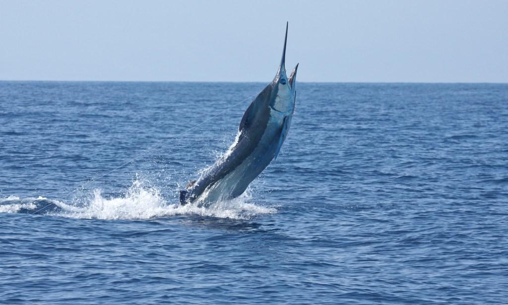 Best Fishing Spots in the US: Kona Hawaii
