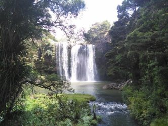 Whangarei Falls1