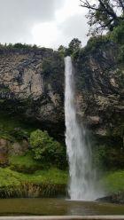 Whangarei Falls4