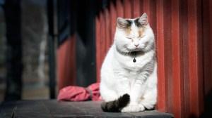 cat-1276634_640