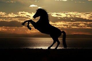 horse-1804425_640