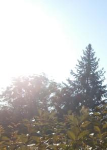 Die Sonne macht den Morgen angenehm