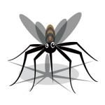ジカ熱とは 小頭症との関係も指摘される感染症 日本は大丈夫?