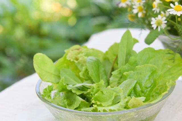 サラダ菜_p