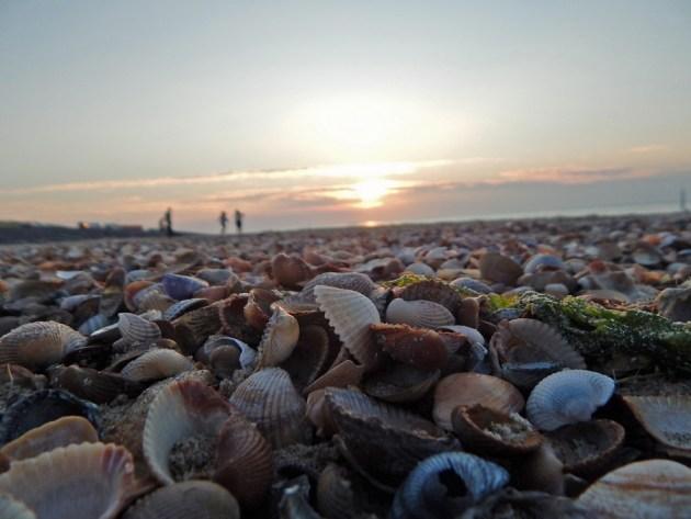 Muscheln am Strand von Westkapelle