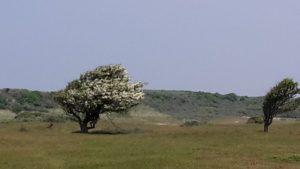 Dünenlandschaft bei Oostkapelle